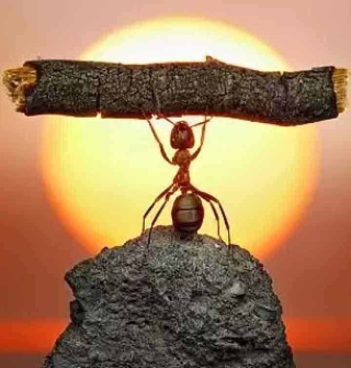 منطق مورچه ای